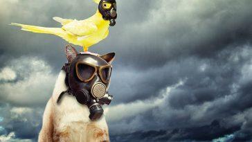 Volksbegehren für Klima und Tierschutz