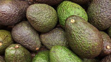 Ein Trend für die Tonne – Avocados