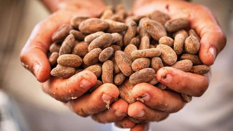 Warum Fairtrade Schokolade?