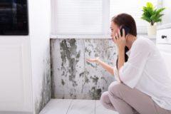 Mauertrockenlegung Progal
