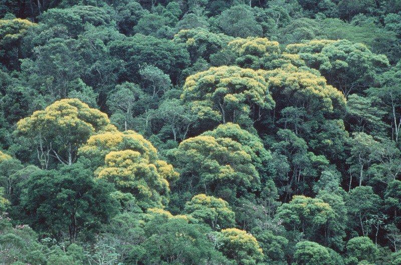 Zertifizierungssysteme wie FSC sind die Zerstörung von Grünwäldern | Greenpeace int.