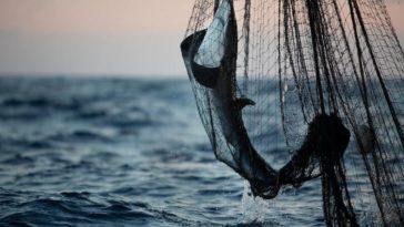 Todesmauern: Fischerei bedroht den Lebensunterhalt im Indischen Ozean