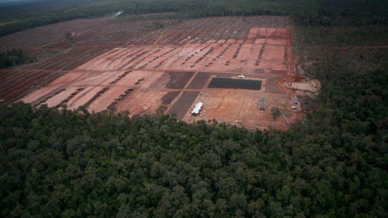 Geplante Entwaldung bedroht indigenes Land und intakten Waldlandschaften in West-Papua