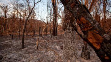 Entwaldung und Rekordbrände in Brasilien: Zusammenhang mit weltweit größten Fleisch-Verarbeiter JBS | Greenpeace int.