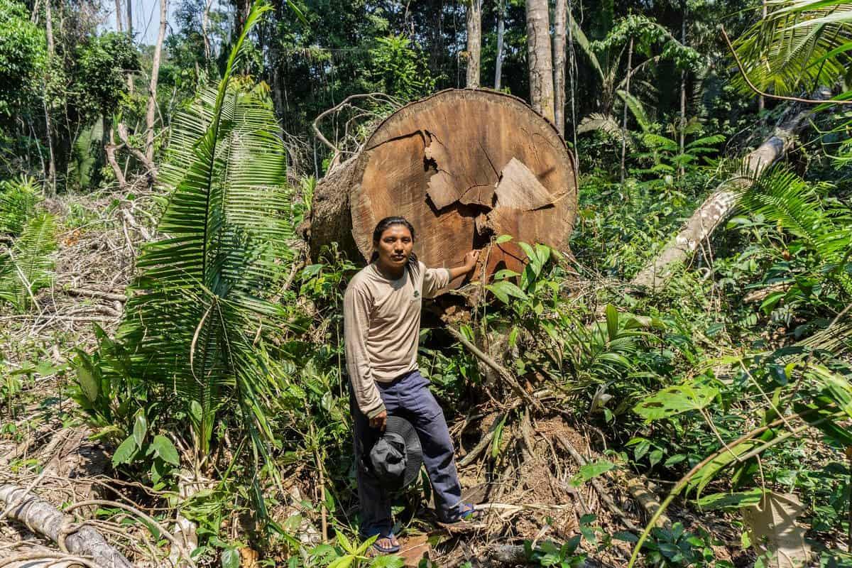 Landraub: Indigene Völker verklagen Brasilien