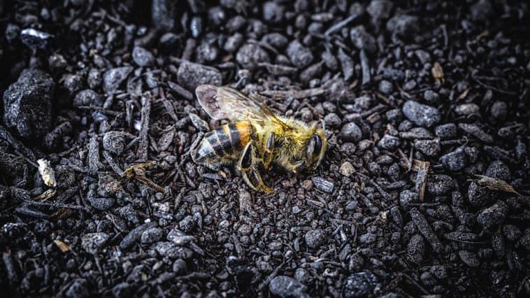 Das Artensterben schreitet voran
